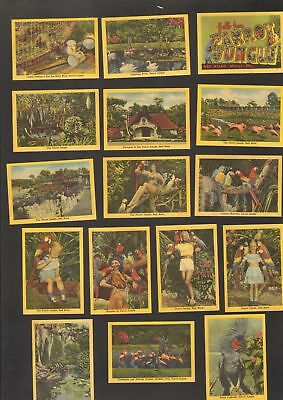 Undated Travel Souvenir Miniature 20 Views of The Parrot Jungle Red Road Miami