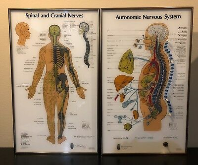 Visual Odyssey Neuropatholator 2 Large Chiropractic Illuminating Light Chart