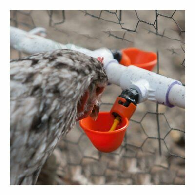 5 Pack Poultry Water Drinking Cups Chicken Hen Fowl Plastic Automatic Drinker