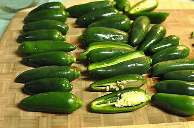 Pepper Seeds, EARLY JALAPENO, Very Hot, 25 Heirloom, non-gmo  FREE  Shipping