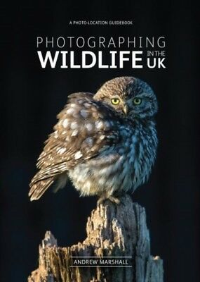 Photographing Wildlife in the UK - where and how to take great wild...