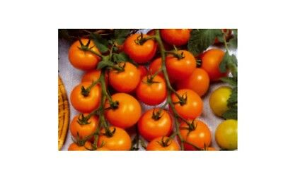 4 x Tomato Sungold F1 - Tomatoes Seeds Vegetables KS546