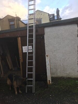 lyte double extension ladder
