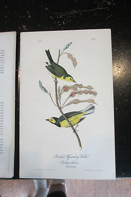 HOODED FLYCATCHING WARBLER - AUDUBON BIRDS OF AMERICA , CA: 1840s HAND COLORED