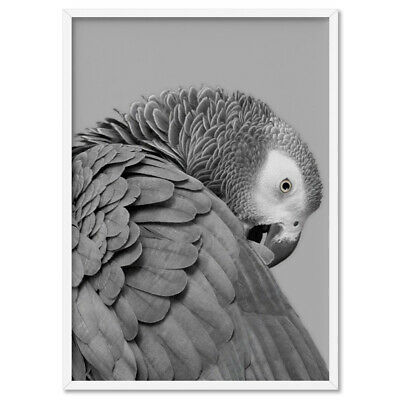 GREY PARROT - Wall Art Print Poster Canvas - On Trend Scandi