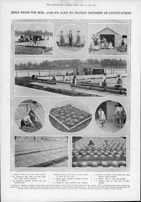 1908 Antique Print - BERKSHIRE Thatcham French Cultivation Jones Peers Bell(187)