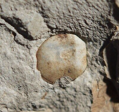 Mysterious square-shaped pre dinosaurs fossil plant unknown seed fossil