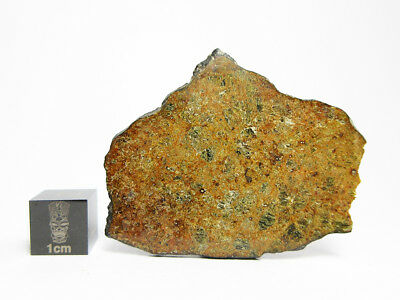 NWA 7464 Diogenite 4.85g Fusion Crusted Meteorite Full Slice from 292g Mass