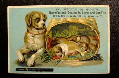 Victorian Trade Card-H. FINN & SONS SOAPS-SYRACUSE, N.Y-ST. BERNARD & PUPPIES