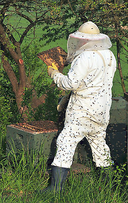 Bee Keeping Queen 35 Books CD Honey Bee Bees Homesteading Apiculture Apiary Wax