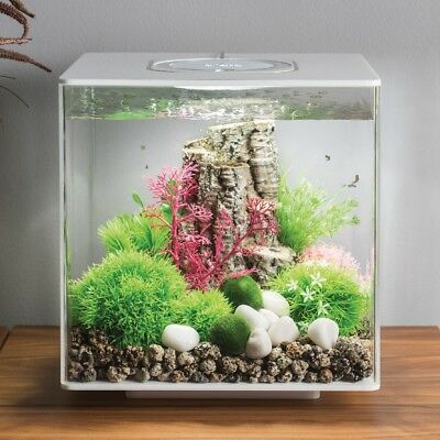 biOrb® CUBE 30 by Oase: Aquarium Kit with Aeration, Filtration & Lighting