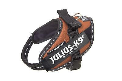 Julius K9 ®IDC Power House Harness Dog Copper Orange Size mini mini 40-53cm SALE