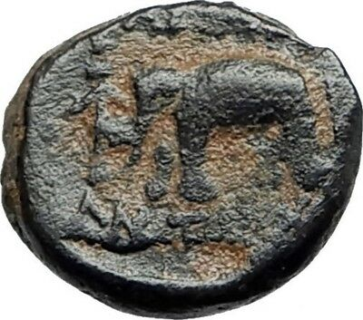 ANTIOCHOS III the GREAT - Rare R1 Ancient Greek SELEUKID Coin ELEPHANT i75435