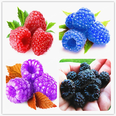 500 Pcs Seeds Raspberry Bonsai Organic Fruit Tree Sweet Plants Home Garden NEW O