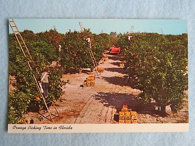 Vintage POSTCARD: Minute Maid Company - Orange Picking Time In Florida