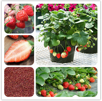 Strawberry Bonsai Tree Very Delicious Fruit Home Garden Plants 100 PCS Seeds NEW