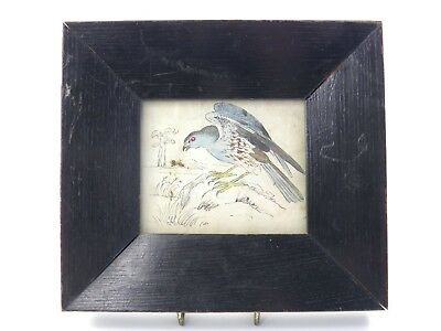 Antique 19th century English School watercolour painting of a bird of prey 3