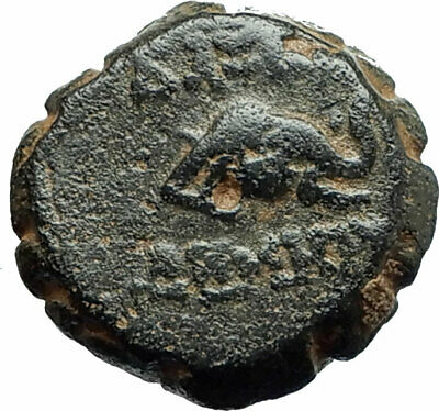 DEMETRIOS I Soter RARE R3 Ancient Seleukid Greek Coin HORSE ELEPHANT i75742