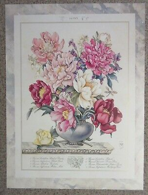 """Peony - Traditional Pink Floral Art Print - 18"""" x 24"""""""