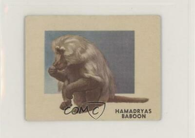 1951 Topps Animals of the World R714-1 #145 Hamadryas Baboon Non-Sports Card z6d