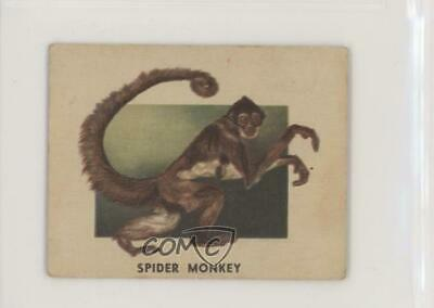 1951 Topps Animals of the World R714-1 #151 Spider Monkey Non-Sports Card z6d