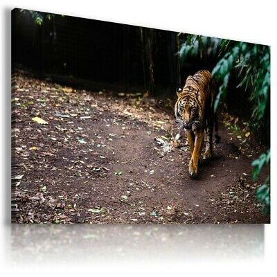 BENGAL TIGER Wild Animals Canvas Wall Art Picture Large Sizes  AN35 X UNFRAMED