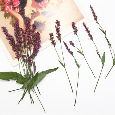 12Pcs Real Pressed Natural Dried Flowers DIY Art Craft Scrapbook Decorations