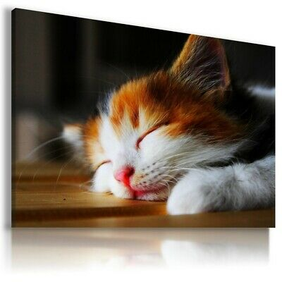 LOVELY DOMESTIC CAT Wild Animals Canvas Wall Art Picture Large Sizes  AN37 X
