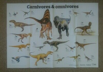 The Guardian -Dinosaurs Carnivores Omnivores - A1 educational poster wall chart