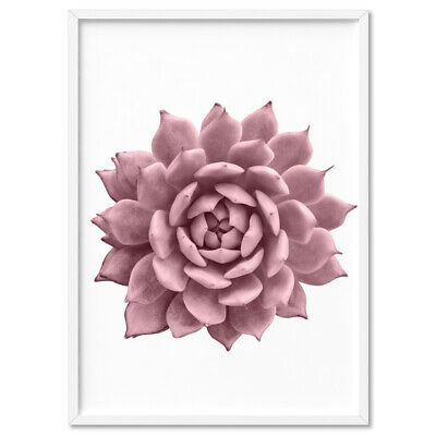 Succulent Printed Poster. Cactus Blush Pink Art Print. Poster or Canvas   PLT-22