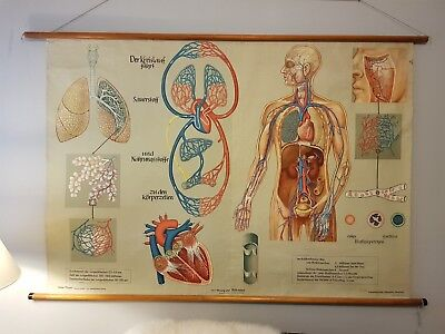 Vintage Pull Down Educational Chart. Medical Content. V-Large