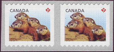 """CANADA 2013 coil pair (horiz), #2603 """"P"""" Woodchucks, from coil of 5,000 MNH"""