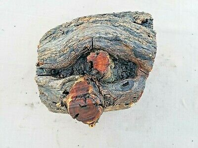 Salvage LARGE CHUNK Live Edge Hard Wood Burl Mesquite Bowl Turning Block 101