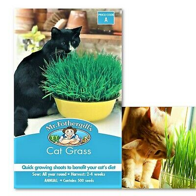 Catgrass Seeds Packet for The Fussy Cat Grass Seed Natural Medicine Cats Treat