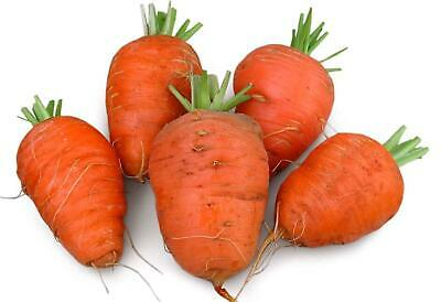 Oxheart Carrot 200 Seeds #8136 Item Upc#650348691721