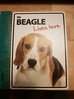 My beagle Lives here - Plastic Sign
