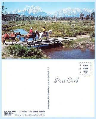 Horses Pack Horse & Riders on the Trail Mountain Western Life Postcard