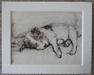 """Lucy Dawson (Mac) Played Out - 8""""x10"""" Mounted Art Print - Dog Sketch Picture"""