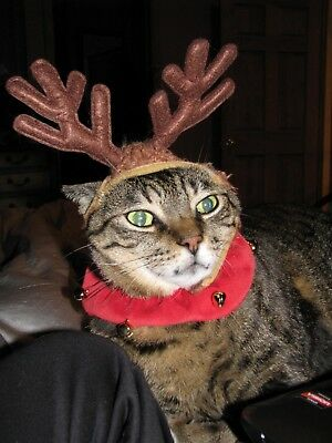Cute reindeer hat for cat or small dog Halloween EUC