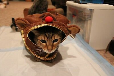 Christmas Reindeer costume for small dog or a cat EUC Halloween