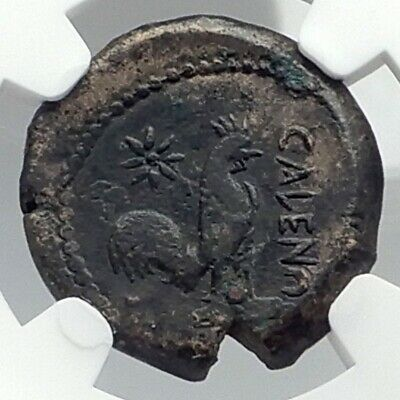 CALES in CAMPANIA Authentic Ancient 270BC Greek Coin ATHENA & ROOSTER NGC i77281
