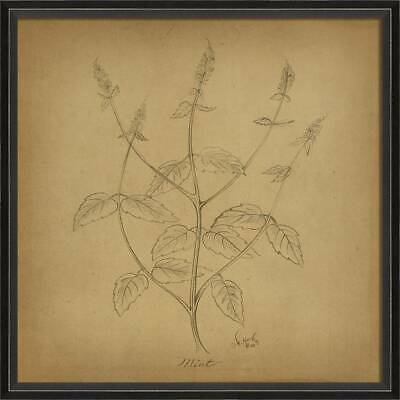Spicher and Co USA Framed Botanical Herb Drawing