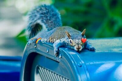 Digital Picture Image Photo Wallpaper JPG Desktop Screensaver Beautiful Squirrel