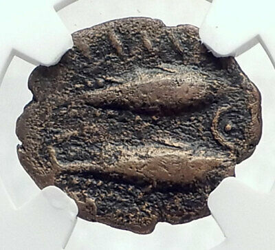 GADES now CADIZ Spain 100BC Ancient Greek Coin w HERCULES FISH NGC i77356