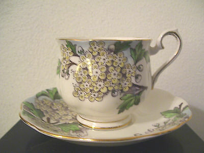 "VTG Royal Albert Flower Of The Month Series No. 5 "" Hawthorn ""  Cup & Saucer"