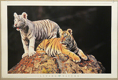 (Prl) 1998 Tigri Tigers Living Nature Vintage Affiche Print Art Poster Collect