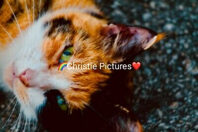 Digital Picture Image Photo Wallpaper JPG Desktop Screensaver Beautiful Cat