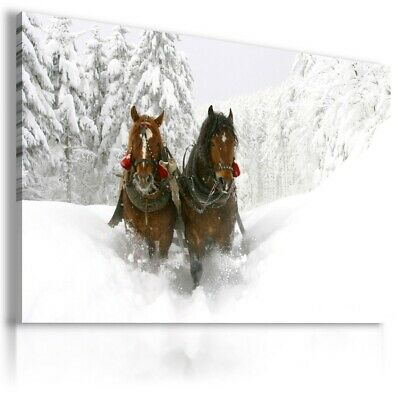 Canvas Picture Prints Stunning Wild Horses Coloured Animals Art Large Poster