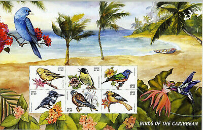 Nevis - Birds of the Caribbean **