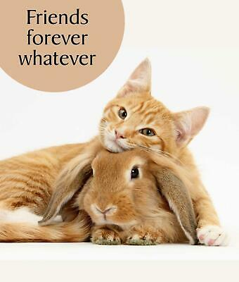 Friendship Card Cat Rabbit Lovers Greeting Card Ginger Cat Friends Forever Card